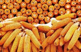 金达威:前三季度净利同比预增40%-60%